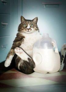 _кот с молоком