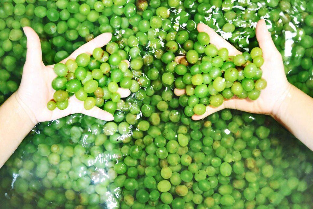 Настойка из винограда простой рецепт