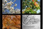 Народные приметы о погоде по месяцам и временам года