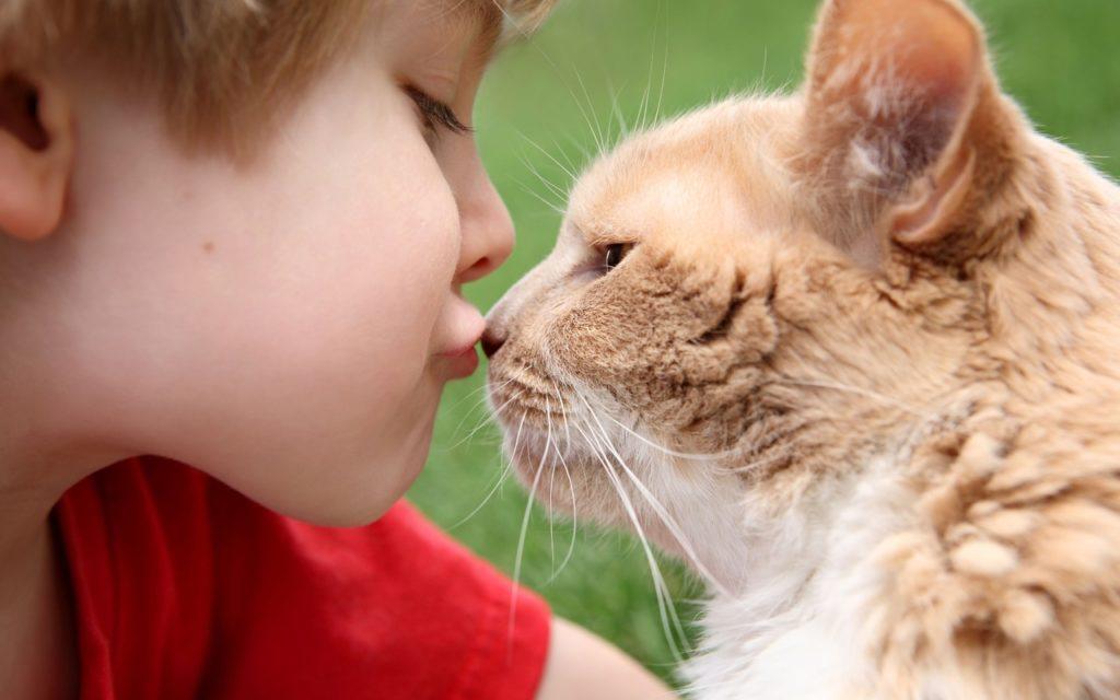 контакт с кошками