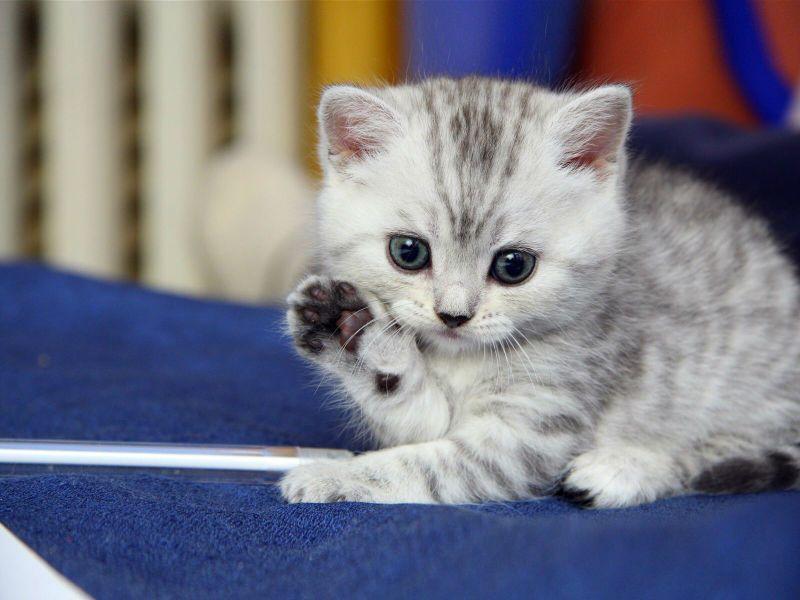 Как приучить котенка ходить в лоток видео за 3 дня пошаговая инструкция