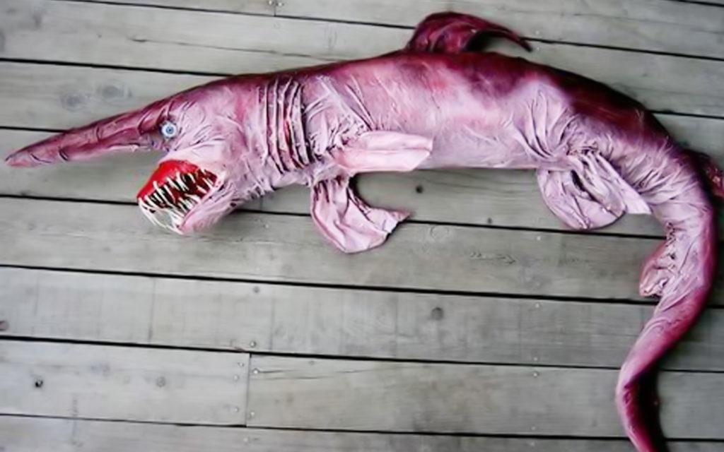 самые страшные животные в мире: акула-домовой