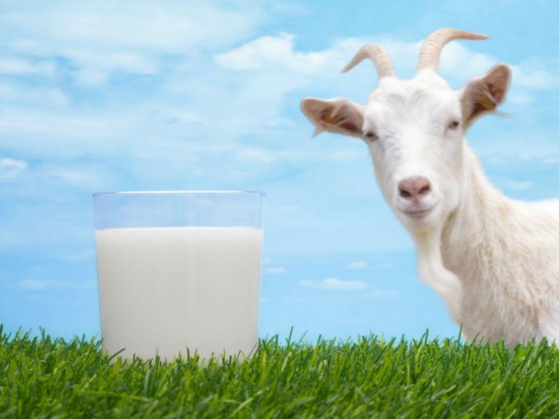 Как сделать грудное молоко жирным и питательным