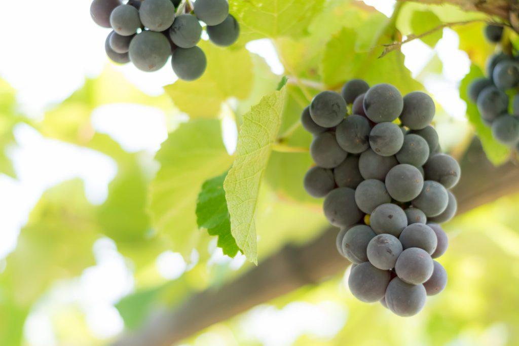 3.Домашняя чача из винограда
