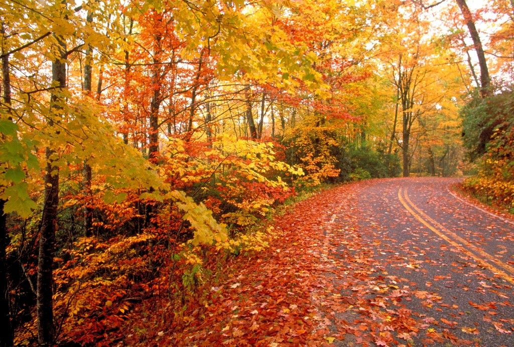 Народные приметы про погоду осенью