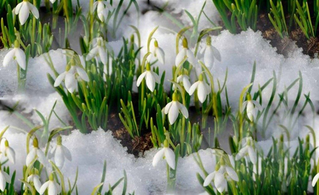 Народные приметы про погоду весной