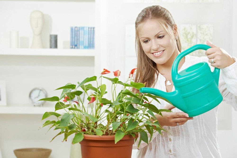 Как ухаживать за антуриумом в домашних условиях