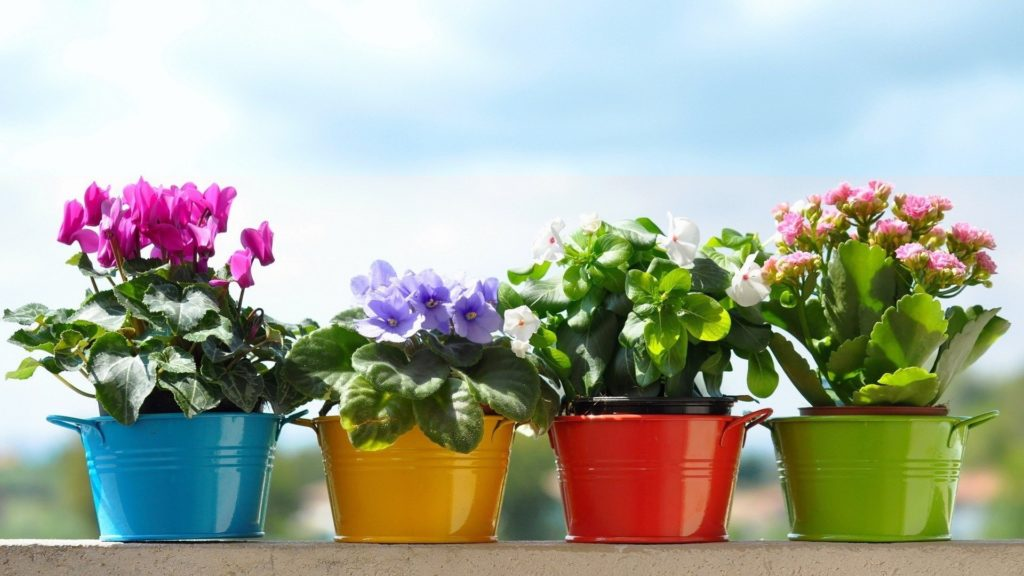Какие комнатные цветы приносят в дом счастье и благополучие