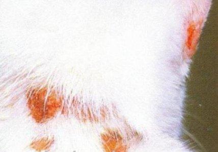 лечить лишай у кошки