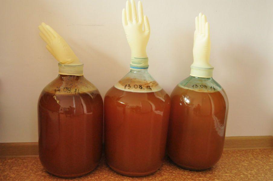 Крепленое вино из яблок в домашних условиях простой рецепт с перчаткой