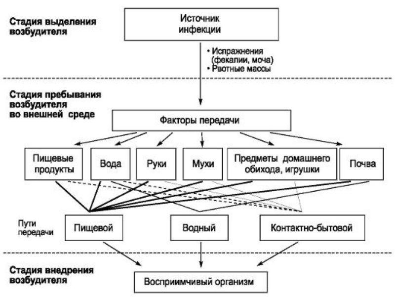 Механизм передачи кишечных инфекций