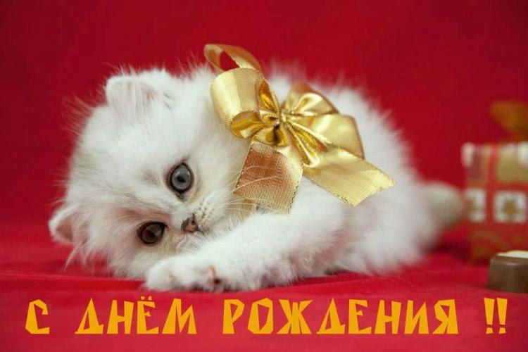 Красивые открытки чтобы поздравить с днем рождения женщину